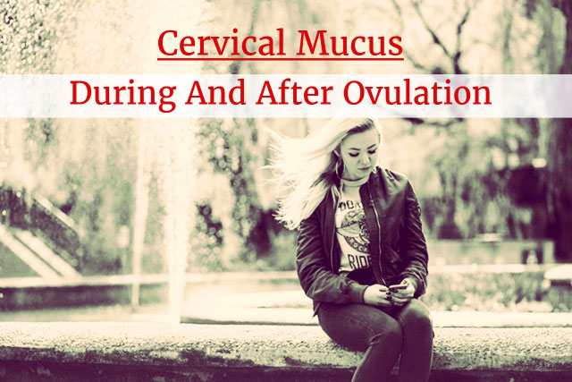 Cervical Mucus During And After Ovulation