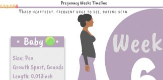 6 Weeks Pregnant Development