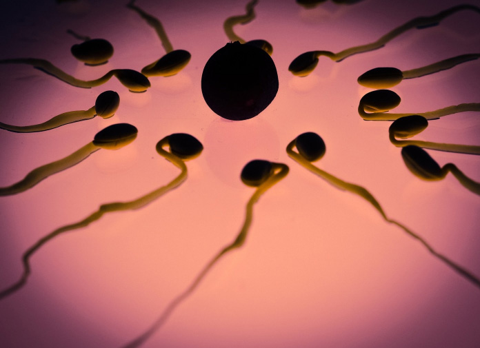 How long does sperm last?