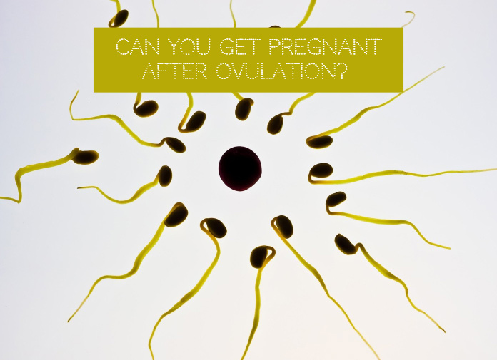 Can You Get Pregnant After Ovulation?