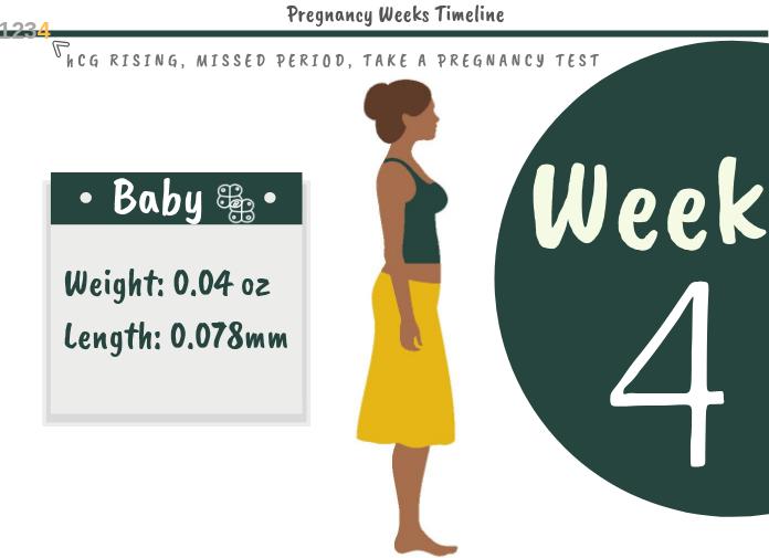 4 Weeks Pregnant