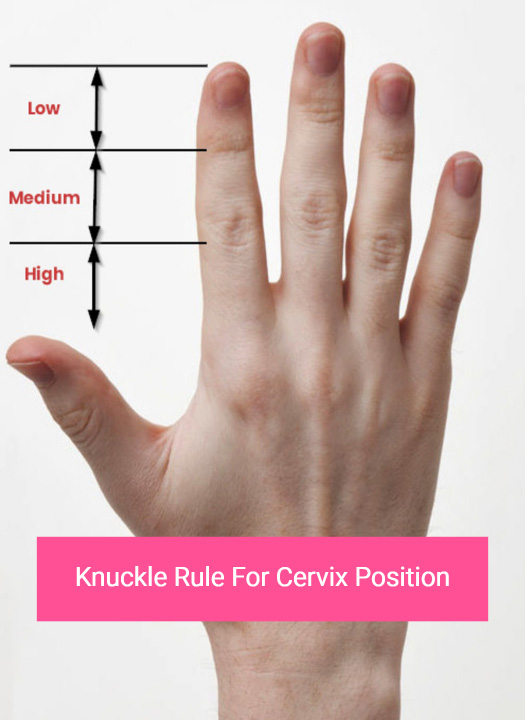 Knuckle rule for cervix position