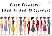 First Trimester [Week 1- Week 13 Overview]