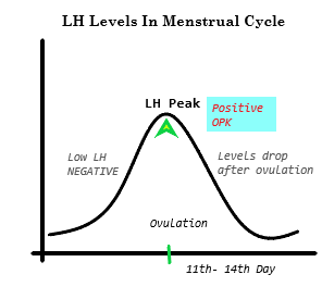 LH Levels In Menstrual Cycle